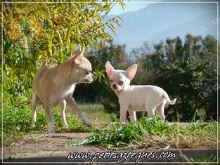 """""""Quoi ? Et c'est comme cela que tu traites ta mère maintenant que les installations d'élevage sont extérieur !"""""""