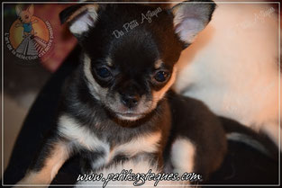 Photo de chiot