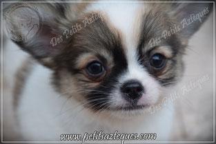 Croquette chien