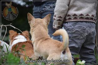 Chihuahua et enfant, race incompatible ?