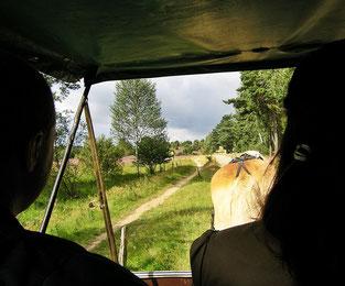 Auf dem Weg nach Wilsede. Foto ©skb2014