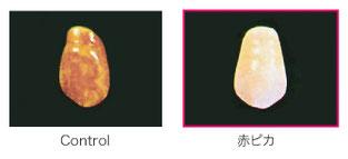八戸市 歯医者 くぼた歯科 義歯 ノンクラスプ 入れ歯