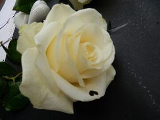 schrift auf Rose