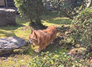 愛犬の庭の散歩