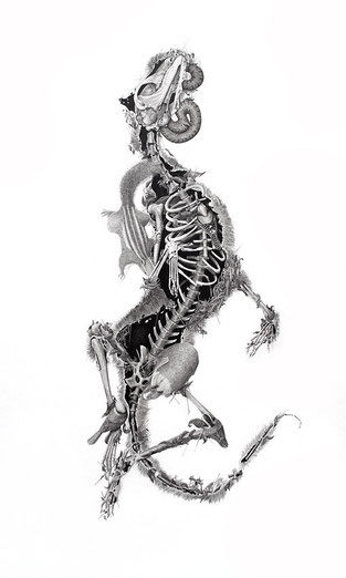 Pablo Acero – A0 / Habitable Cadavers series / Graphite on paper / 23.6 x 14 inches / 2014.