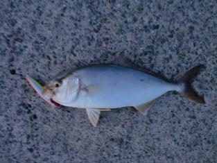 ショアジギングの釣り場 萩市・阿武町