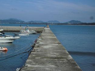 宗像市・福津市・新宮町のアオリイカの釣り場