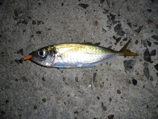 アジ釣り バナー