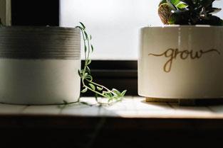 Pflanzen grow