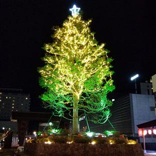 函館_HAKOVIVA(ハコビバ)_シンボルツリークリスマスイルミネーション企画_幸作室