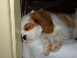cucciolo addormentato