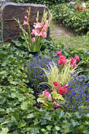 Grabbepflanzung im Sommer
