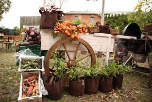 Bio Gemüseverkauf