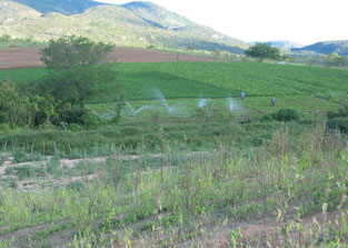 Irrigation and agriculture in the dry riverbed of Mutuca River