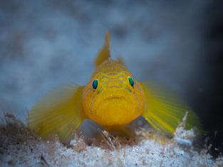Fish,Pulau Weh