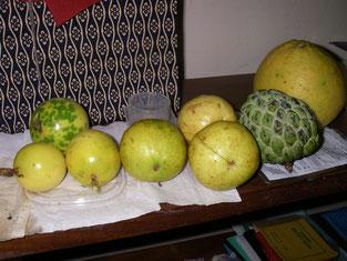 宿舎の庭で採れた果物。左からパッションフルーツ、グアバ、カスタードアップル、グレープフルーツ!!