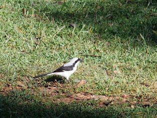 """なんという鳥? 地元の人々は、鳥や草花の名前など""""自然""""には無関心。生きるのに精いっぱいだからでしょうか・・・"""