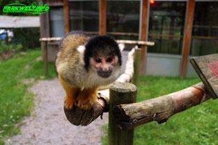 Affen und Vogelpark Eckenhagen Tierpark Wildpark Zoo Nordrhein Westfalen