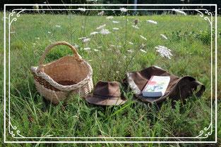 Plantes sauvages comestibles et médicinales de Nouvelle Aquitaine