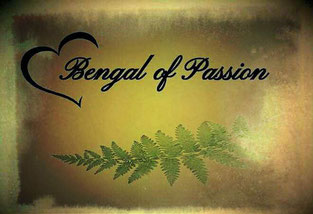 Bengal of passion