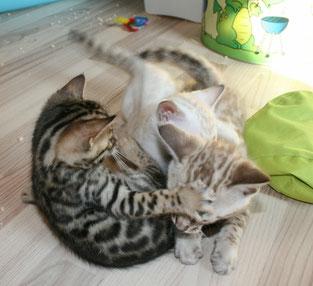 OH Nein! Schau nicht hin! Meowmy gibt es uns nicht ab!