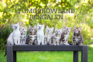 Tomorrowland Bengalen