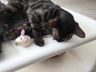 Loulou & ihr Mäuschen!