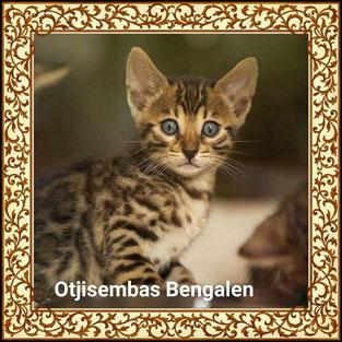Otjisemba`s Bengalcattery