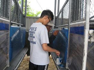 競馬場のゲート補修の手伝い(ゲートのペンキ塗り)