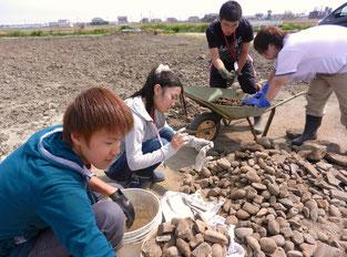 畑から掘り起こされた堆積物を丁寧に仕分けしていきます
