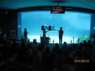 水族館の職員の方が、イルカにパフォーマンスをおこなわせる様子。