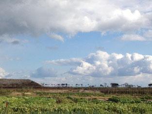 海岸付近は復旧工事が行われています。被災した松林も見えます