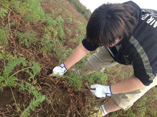 1歩1本指で丁寧に掘ってから収穫します。意外と重労働で、腰も痛くなります。