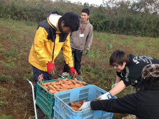 サポステの尾形さんと藤村さんと一緒に、収穫したにんじんを箱につめています。