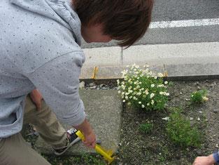 まずは学校前の花壇からきれいにします。