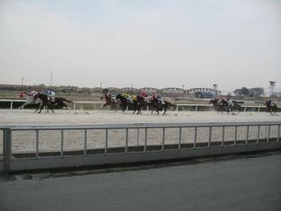 笠松競馬場のレースの様子