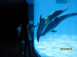 名古屋港水族館の様子。