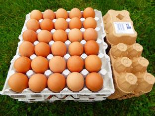 boite 6 oeufs bio breizh on egg