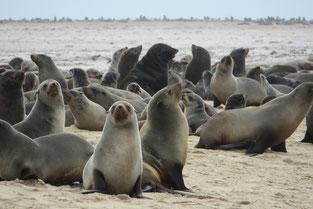 Walvis Bay - tierisches Paradies in Namibia