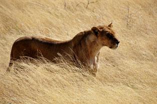 Etosha Nationalpark - tierisches Highlight in Namibia
