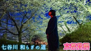 京都賞櫻2018 龜岡櫻花公園私房景點 七谷川