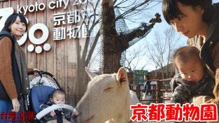 【京都親子自由行】京都市動物園 ・京都推薦