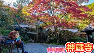 【京都賞楓】關西賞楓好去處2018~京都紅葉私房景點 ‧ 四百年樹齡大楓樹的神藏寺