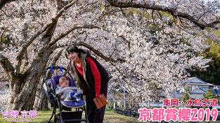【京都賞櫻】2019・京都 櫻花開花情報更新 - 龜岡 水鳥之道