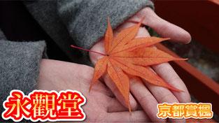 【京都賞楓】關西賞楓好去處~京都紅葉熱門景點