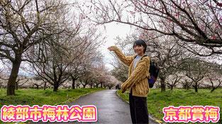 【京都賞梅】初春賞梅去~綾部市梅林公園・梅祭