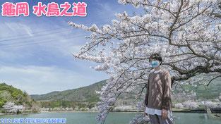 2021京都 櫻花開花情報更新 - 龜岡 水鳥之道 2021年3月27日
