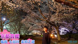 【京都賞櫻】2019 京都 - 龜岡 七谷川 柔和之道 夜櫻