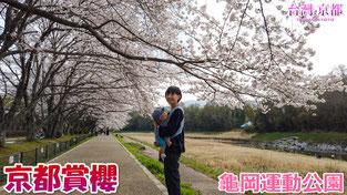 【京都賞櫻】2019 京都 櫻花開花情報更新 - 龜岡 龜岡運動公園