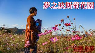 【京都景點】京都 龜岡 ‧ 夢之波斯菊花園、關西大規模波斯菊花海 秋桜